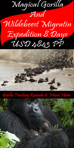 Gorilla Tracking And Mara Migration Safaris