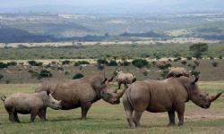 aberdare national park rhinos kenya reserve attractions