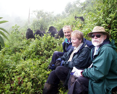 Gorilla Safaris Rwanda From Kilimanjaro Tracking, Trekking, Hiking
